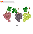 Ripe Grape A Popular Fruit in Kazakhstan vector image vector image