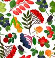 Rowan Berries Pattern vector image