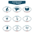 Seaweed icons set vector image