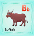 animals alphabet b is for buffalo vector image