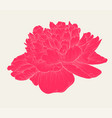 beautiful peony flower in vintage colors isolated vector image vector image
