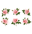 beautiful set pink ornate roses with leaves vector image