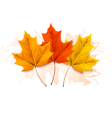 Autumn background with a three colorful leaves vector image vector image