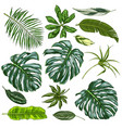 realistic full color tropical leaves vector image