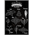 set of images plant herbs for cooking vector image