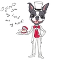 fashion elegant groom dog Boston Terrier vector image vector image