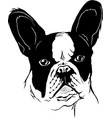 french bulldog animal muzzle vector image vector image