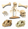 Human skeleton body parts and animals skulls vector image