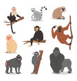 monkey set cute animal macaque monkeyish vector image