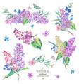 set vintage floral bouquet lilac vector image vector image