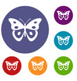 butterfly pierid icons set vector image vector image