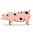 flat geometric gloucestershire old pig vector image