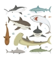 shark different pose set vector image vector image