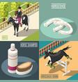equestrian sport 2x2 design concept vector image vector image