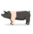 flat geometric hampshire pig vector image