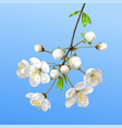 spring blooming branch realistic vector image vector image