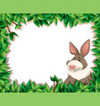 rabbit on nature border vector image vector image
