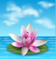 water lily nenuphar spatter-dock pink lotus on vector image vector image
