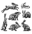 wild hares set rabbits are sitting and jumping vector image vector image