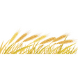 ripe yellow wheat ears vector image vector image
