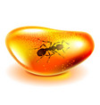 amber with ant isolated on white vector image vector image
