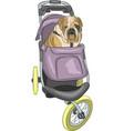 english bulldog in the stroller vector image vector image