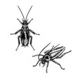 hand drawn set cockroach realistic sketches vector image