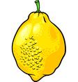 lemon citrus fruit cartoon vector image vector image