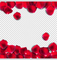 abstract natural rose petals on transparent vector image vector image