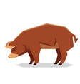 flat geometric red wattle pig vector image vector image