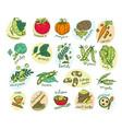 vegetable hand drawn set vector image