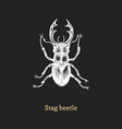 stag beetle drawn insect in vector image vector image