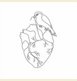 bird sitting on a heart line vector image