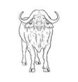 buffalo animal sketch vector image