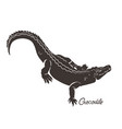 crocodile isolated on a white background vector image