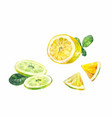 cut slices of lemon bergamot or lime on a white vector image vector image