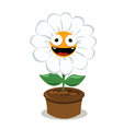 Funny Daisy in a Pot vector image vector image