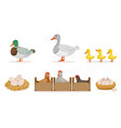 poultry farm with hens ducks and gooses eggs and vector image
