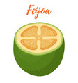 feijoa tropical fruit cartoon flat style vector image vector image