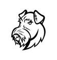 head airedale terrier bingley terrier vector image vector image