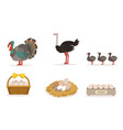 poultry farm with turkey ostrich little birds vector image