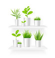 realistic detailed 3d house plant pot shelves set vector image vector image