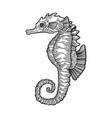 sea horse fish skeleton engraving vector image vector image