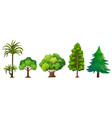 set of different tree vector image