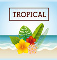 tropical frame design vector image vector image