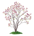Magnolia Tree with Flowers and Grass vector image