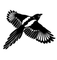 Magpie wings vector image