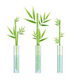 realistic detailed 3d lucky bamboo plant or vector image vector image