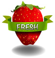 Strawberry with FRESH banner vector image