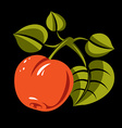 Vegetarian organic food simple ripe orange vector image